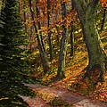 September Road by Frank Wilson