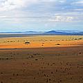 Serengeti Landscape by Tony Murtagh