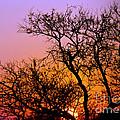 Setting Sun by Pravine Chester