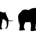 Seven Elefants In Line Silhouette by Nenad Cerovic