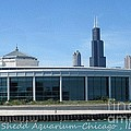 Shedd Aquarium by Kathie Chicoine