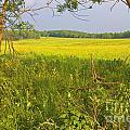 Shenandoah National Park by Jim West