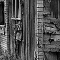 Shingles by Tara Lynn