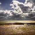 Shoreline by Svetlana Sewell