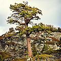 Sierra Landscape by Shawn McMillan