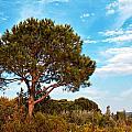 Single Pine Tree Against Blue Autumn Sky by Ken Biggs