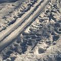 Ski Track In Sunlight by Kerstin Ivarsson