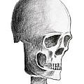 Skull by Michal Boubin
