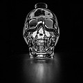 Skull Study  by Penelope Murray