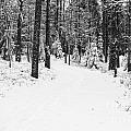 Small Road In A Snowy Forest by Kerstin Ivarsson