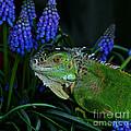 The Night Of The Iguana by Binka Kirova