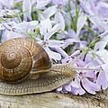 Snail by Jaroslaw Grudzinski