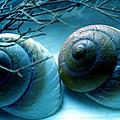Snail Joy  by Colette V Hera  Guggenheim