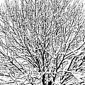 Snow Cover by Gaurav Singh