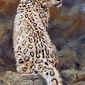 Snow Leopard by David Stribbling