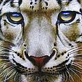 Snow Leopard by Jurek Zamoyski