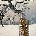 Snowshoes Leaning Against Birch Tree Snowscape by Stephan Pietzko