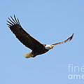 Soaring Eagle by Lori Tordsen