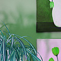 Spider Plant - Green Tulips - Still Life by Barbara Griffin