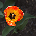 Spring Flowers No. 10 by Greg Hager
