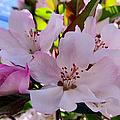 Spring Form by Art Dingo