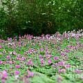Spring Meadow by Susan Herber