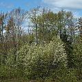 Spring Renewal by Gene Cyr
