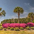 Spring Time In Charleston by Dale Powell