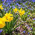 Spring Wildflowers by Elena Elisseeva