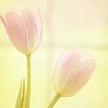 Springtime by Margie Hurwich
