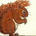 Squirrel by Juan  Bosco