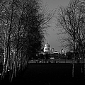 St Paul's With Silver Birches by Gary Eason