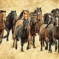 Stampede Of Wild Horses by Athena Mckinzie