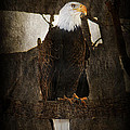 Standing Proud by Melanie Lankford Photography