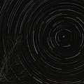 Star Trails 2 by Michael Trammell