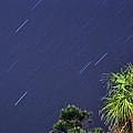 Star Trails by Kay Lovingood