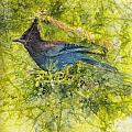 Stellar Jay by Ruth Glenn Little