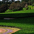 Stoller Vineyard Roads 19050 by Jerry Sodorff