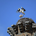 Storks On Top Of Valdecorneja Castle by Nano Calvo