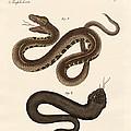 Strange Snakes by Splendid Art Prints