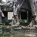 Strangler Fig Tree Roots On Preah Khan Temple by Sami Sarkis