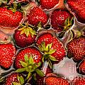 Strawberries  by Amel Dizdarevic