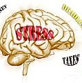 Stress by Scott Camazine