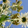 Summer Flowers And Sky by Vasilisa Moruga