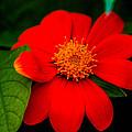 Sun Flower by Gerald Kloss