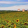 Sunflower Field New Jersey by Regina Geoghan