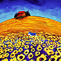 Sunflower Field by Todd Young