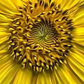 Sunflower In Oil Paint by Erika Fawcett