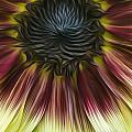 Sunflower In Oils by Erika Fawcett