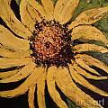 Sunflower by Sherry Harradence